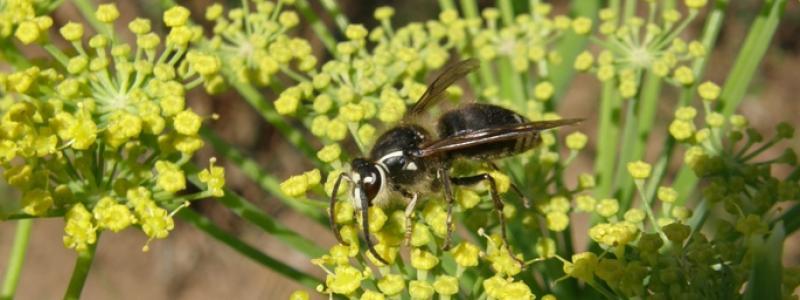 Sélection «Amies des abeilles»