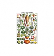 Affiche Légumes et plantes potagères