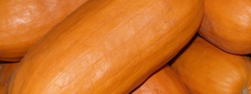 Citrouille Algonquin - Bio
