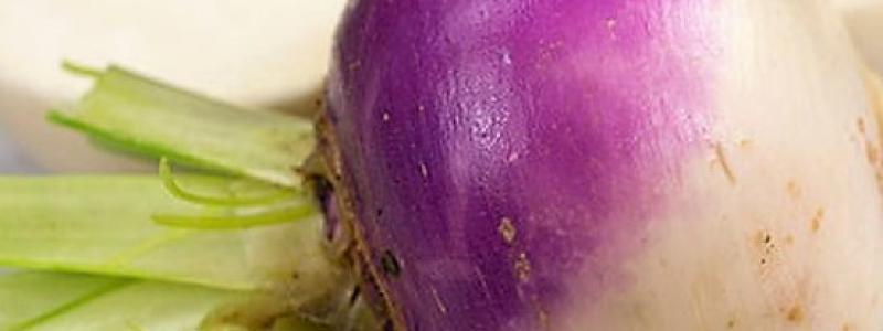 Navet blanc à collet violet - Bio