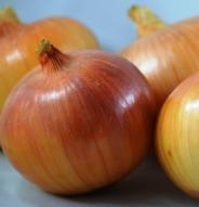 Oignon Yellow of Parma - Bio