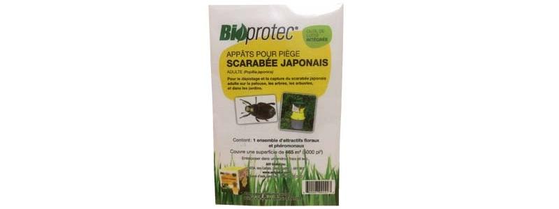 Phéromones scarabée japonais