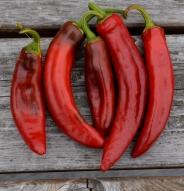 Piment Paprika Hongrois - Bio