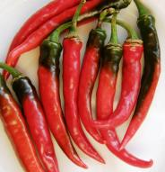 Piment cayenne Ring of Fire - Bio