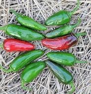 Piment jalapeño Tam - Bio