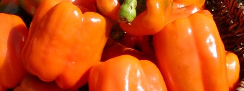 Poivron Gourmet - Bio
