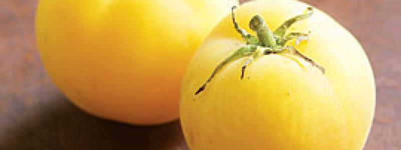 Tomate standard Garden Peach - Bio