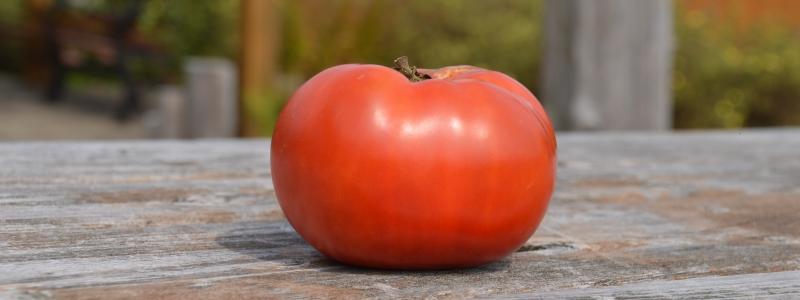Tomate standard Rose de Berne - Bio
