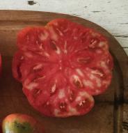 Tomate standard Adelin Morin - Bio