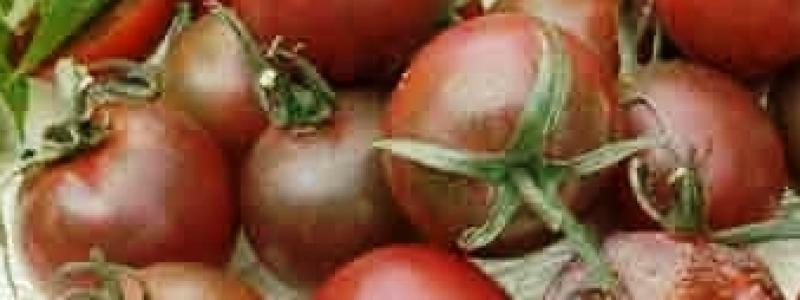 Tomate cerise Black Cherry - Bio