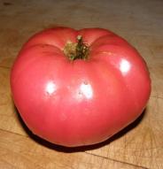 Tomate standard Gregoria Altaï - Bio