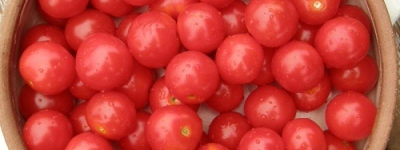 Tomate cerise Matt's Wild Cherry - Bio
