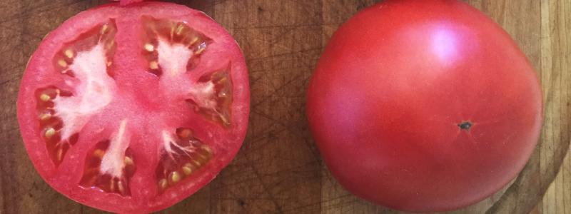 Tomate standard Merveille des Marchés - Bio