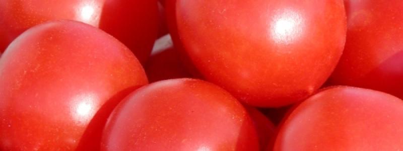 Tomate italienne Principe Borghese - Bio