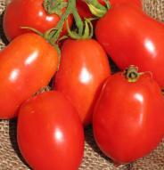 Tomate italienne Ropreco Paste - Bio