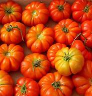 Tomate italienne Rosso Sicilian - Bio