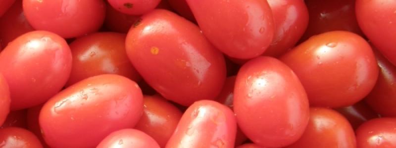 Tomate cerise Sprite - Bio