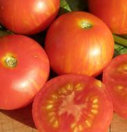 Tomate standard Tigerella - Bio