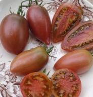 Tomate italienne Ukrainian Purple - Bio
