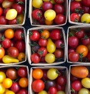 Tomate en mélange petits fruits - Bio