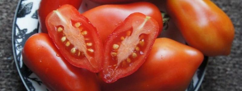 Tomate italienne Dix doigts de Naples - Bio