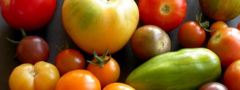 Tomate en mélange gros fruits - Bio
