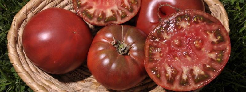Tomate standard Noire de Crimée - Bio