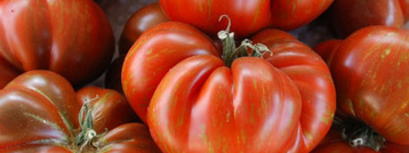 Tomate standard Black and Brown Boar - Bio