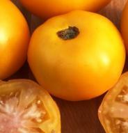 Tomate standard Taxi - Bio