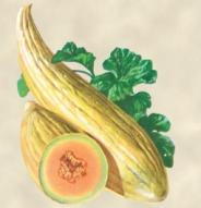 Melon Banana - Bio