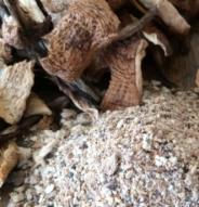 Produits de PFNL Poudre de champignons sauvages – 20 g
