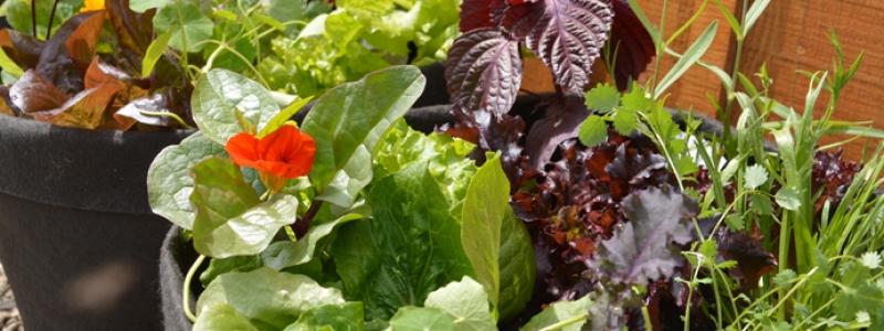 Sélection «Salade gourmande»