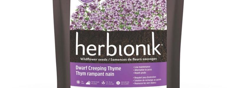 Semences de fleurs - Thym rampant nain - 450 g