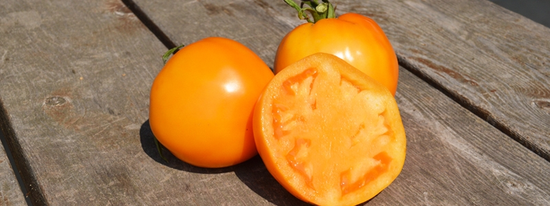 Tomate standard Jubilee - Bio