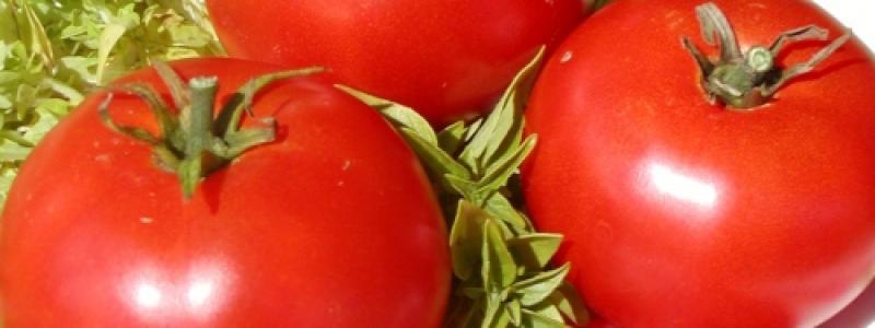 Tomate standard Oregon Spring - Bio